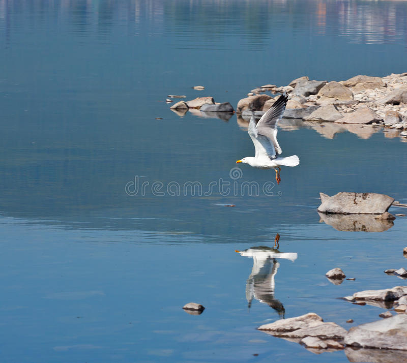 Free Seagull Near Coast Stock Photography - 14887022
