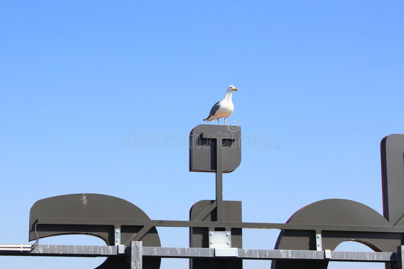 Seagull on a neon