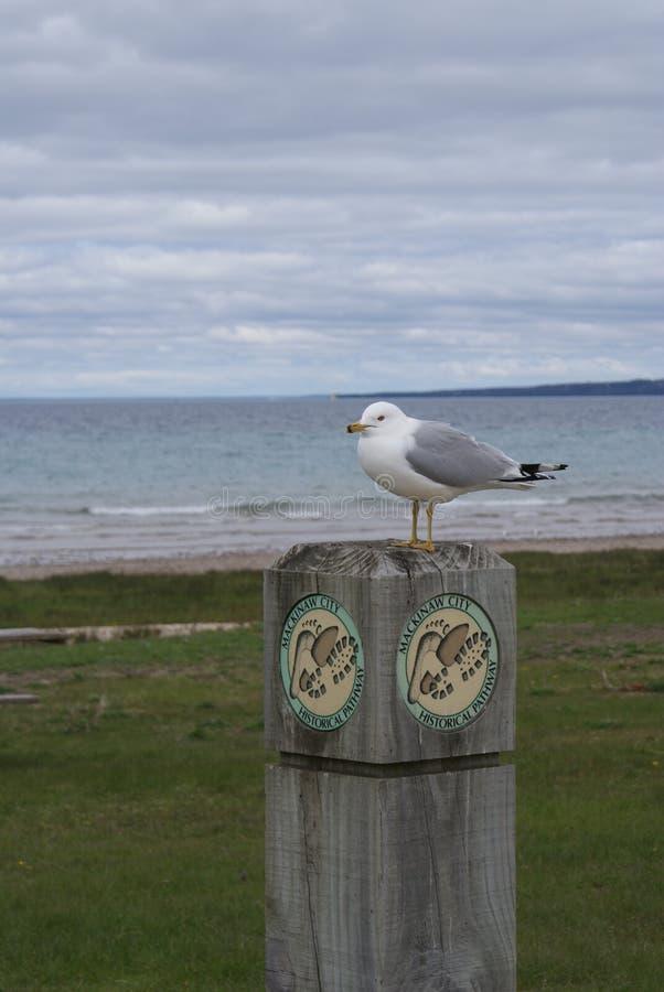 Seagull obsiadanie na Drewnianej poczta jeziorem obraz stock