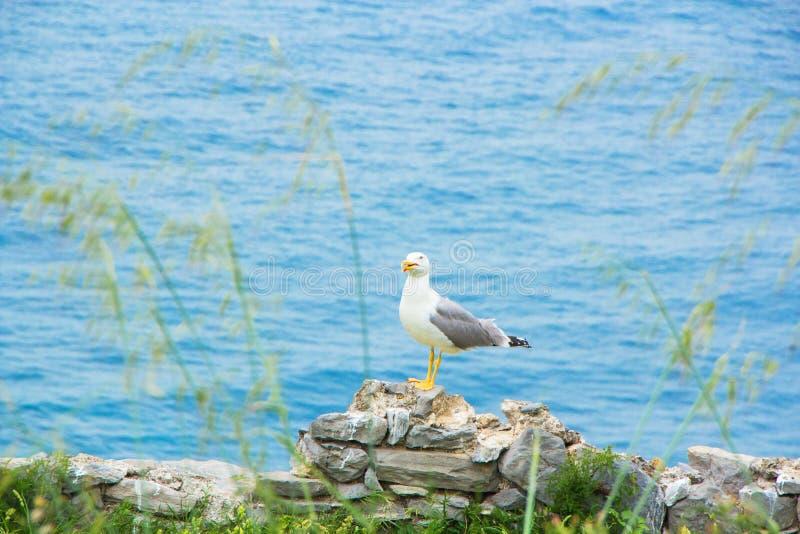 Seagull obsiadanie na kamieniu morzem obrazy stock