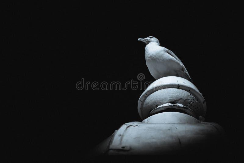 Seagull obsiadanie na wierzchołku budynek fotografia royalty free