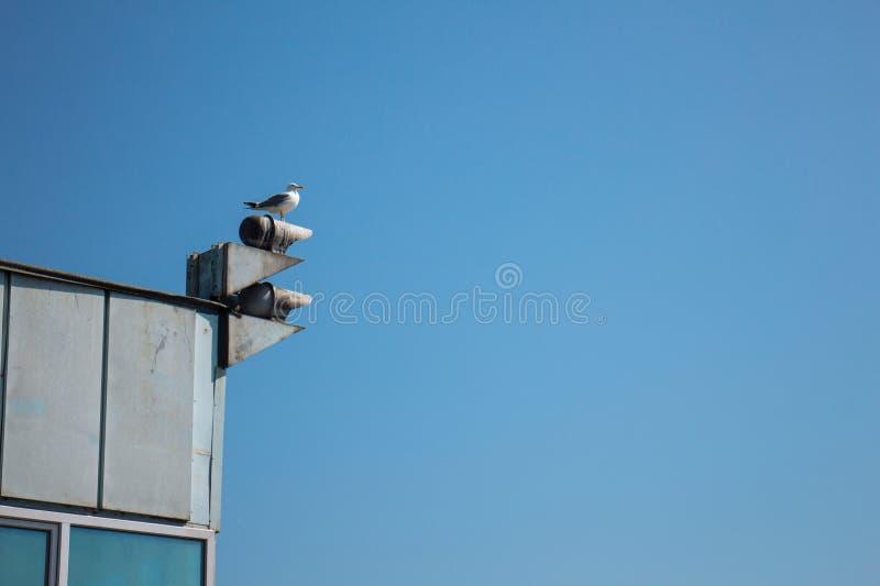 Seagull och negativt utrymme royaltyfria foton