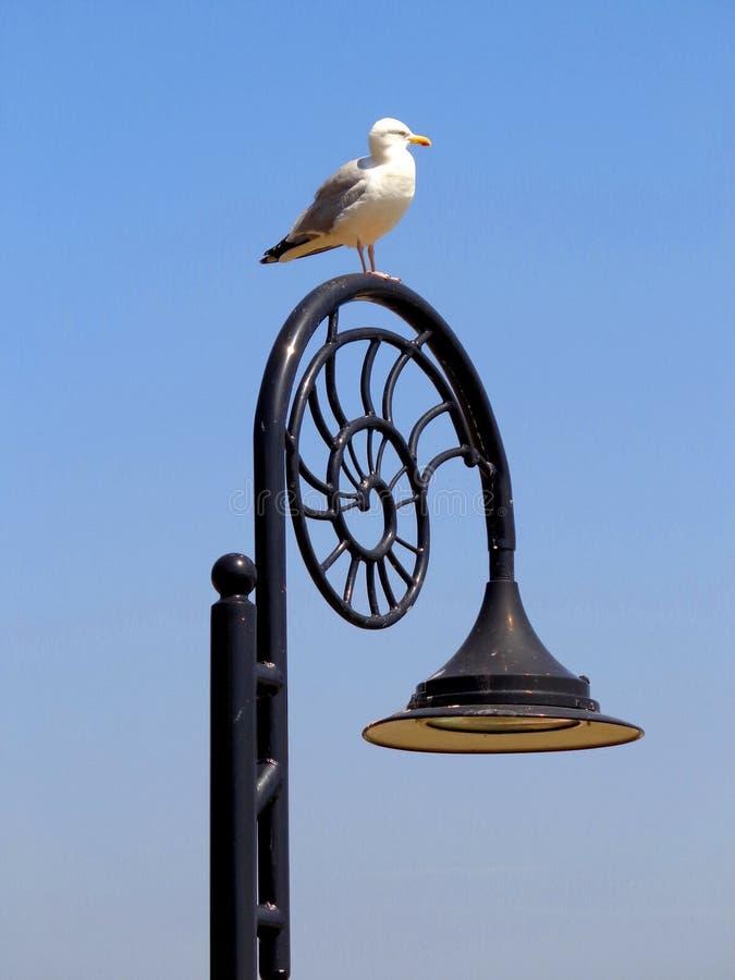 Seagull och snigel arkivbild