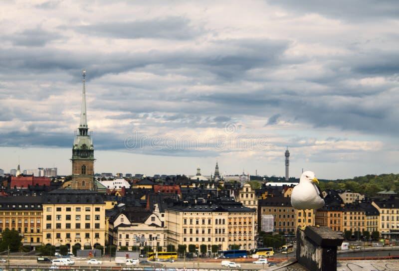 Seagull och Stockholm royaltyfri bild