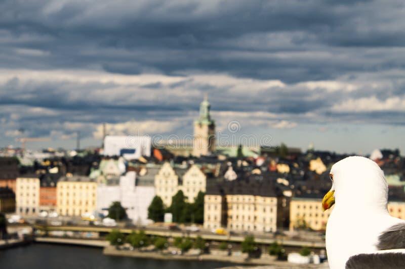 Seagull och Stockholm arkivfoto