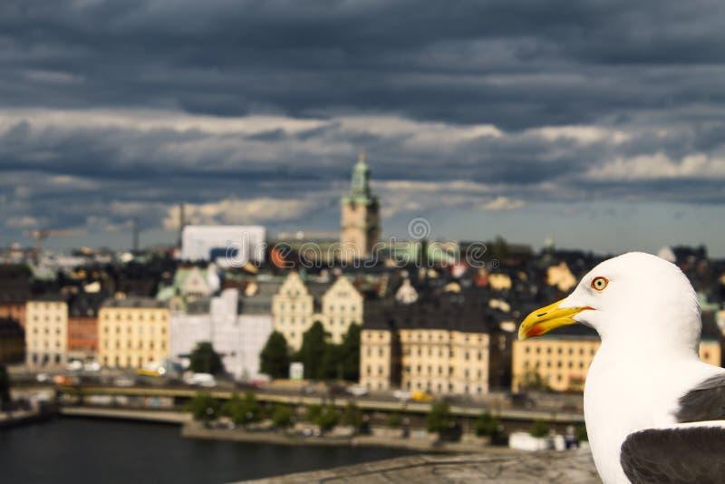 Seagull och Stockholm royaltyfri fotografi
