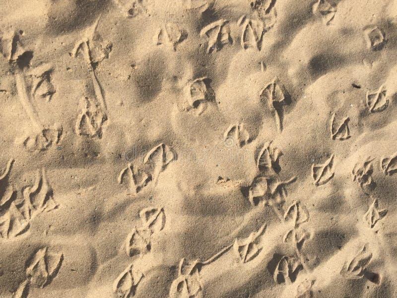 Seagull odciski stopi na piasku, ptasi cieki wzorów, ocean plaża pluskocze piaska tła teksturę obraz stock