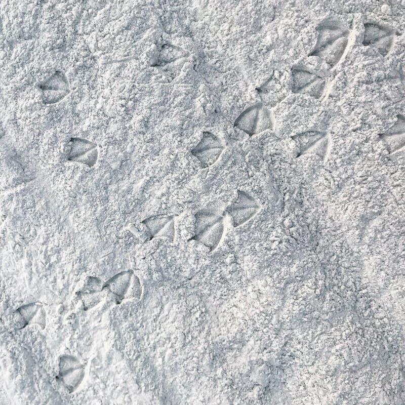 Seagull odciski stopi przez piaskowatą plażę zdjęcia stock