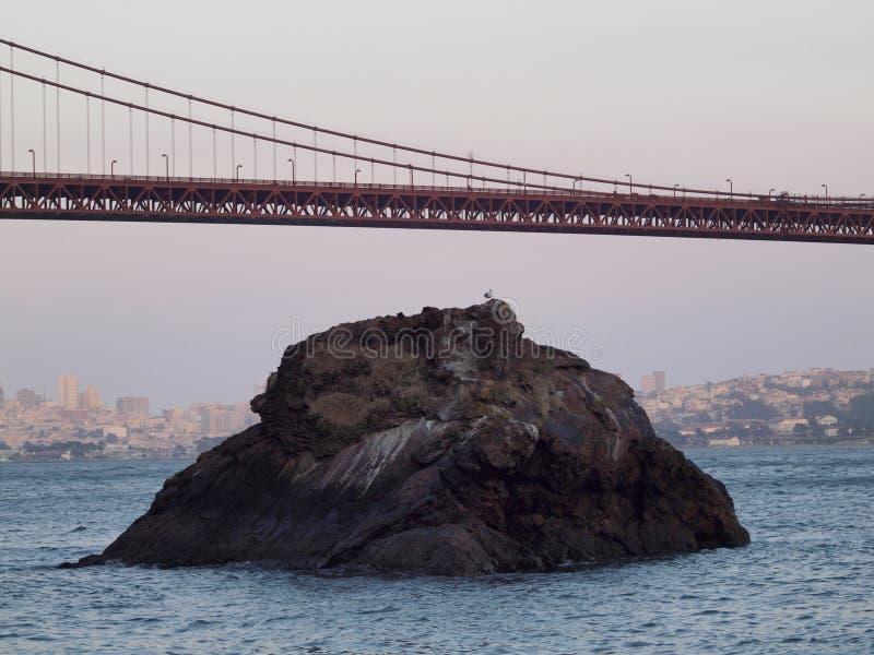 Seagull odpoczynek na skale pod Golden Gate Bridge zdjęcie royalty free