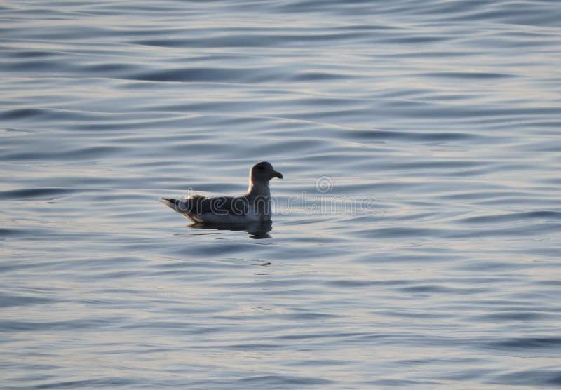 Seagull odpoczywa na fala zdjęcia stock