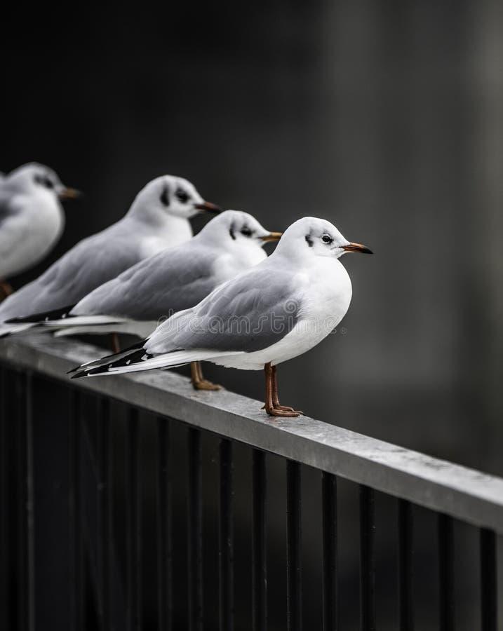Seagull odpoczywa na poręczu zdjęcia stock
