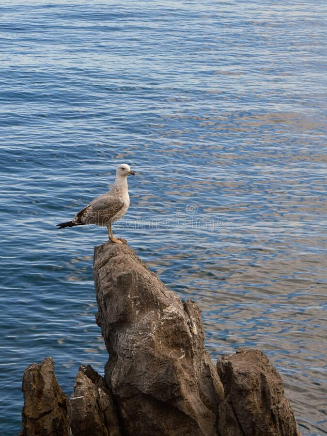 Free Seagull On A Rock Royalty Free Stock Photo - 181673845