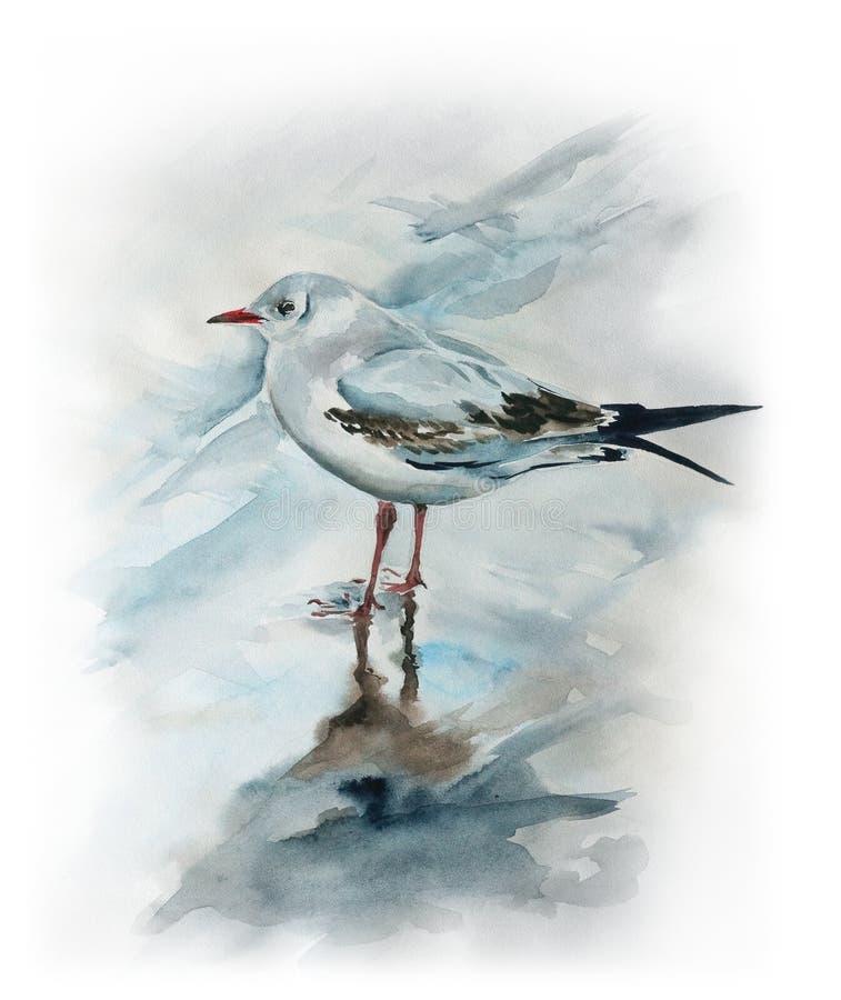 Free Seagull On The Beach Stock Photo - 63155510