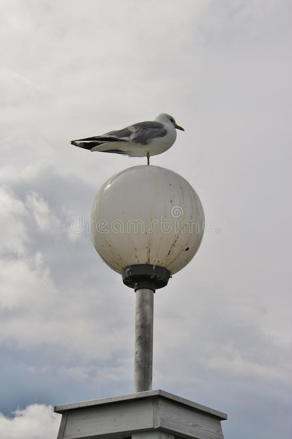 Seagull on one leg on a street lamp. Karlstad, Sweden. In the recreation Park Mariebergsskogen in Karlstad. Sweden, scandinavia, Europe. A seagull standing on stock photo