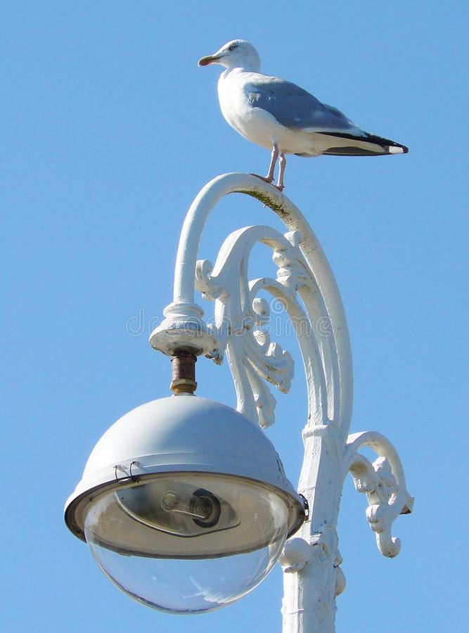 Seagull on a ornate streetlight royalty free stock photos