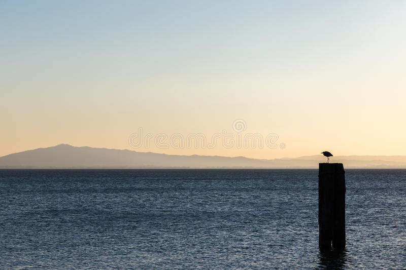 A seagull over a pole on a lake, with distant hills in the background, and very soft and warm sunset colors royalty free stock photos