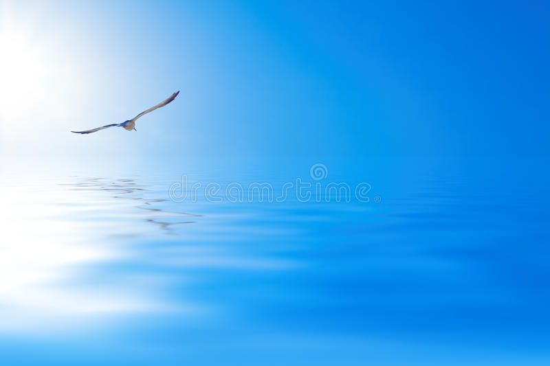 Seagull over the sea. Seagull hovering over the sea royalty free stock images