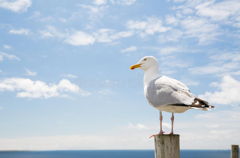 Seagull over sea and blue sky stock images