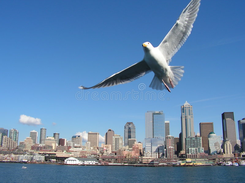 Seagull over Seattle stock photography