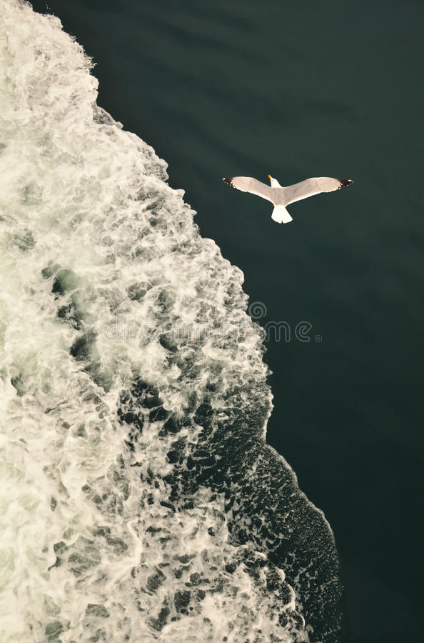 Download Seagull over the waves stock photo. Image of shores, gulls - 28387156