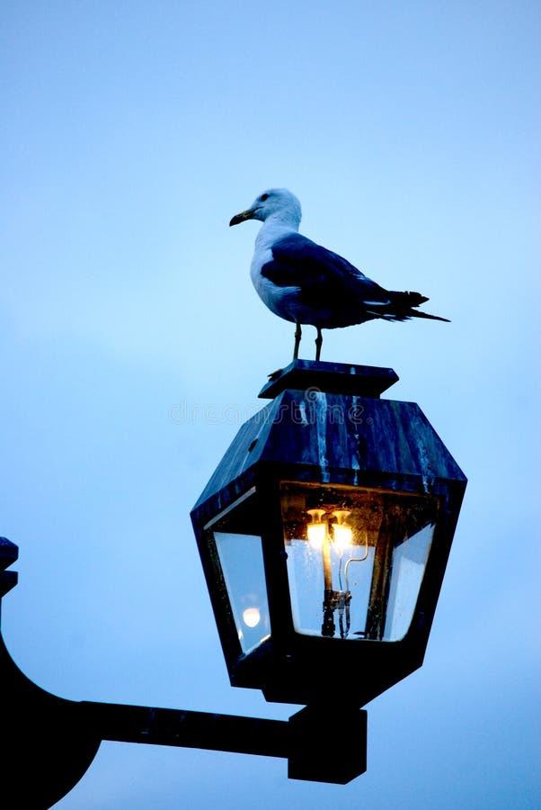 Seagull på den Otaru kanalen arkivbilder