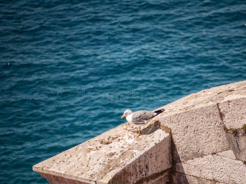 Seagull på en vägg royaltyfri fotografi