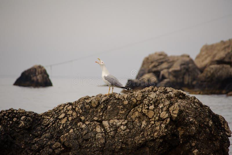 Seagull på en vagga vid havet crimea arkivbilder