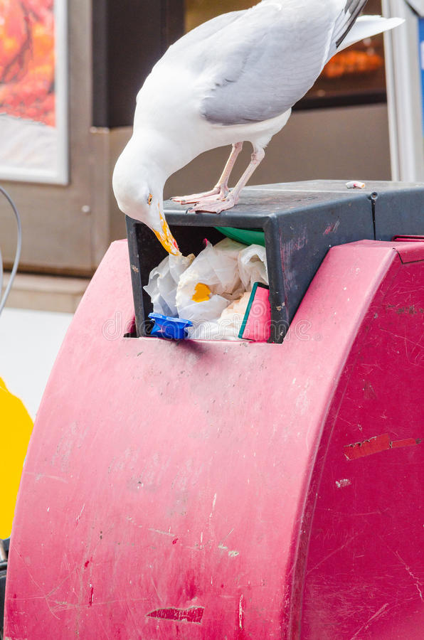 Seagull på ett avfall arkivfoto