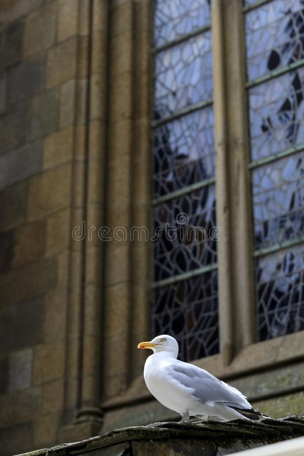 Seagull på förutom en kyrka royaltyfri bild