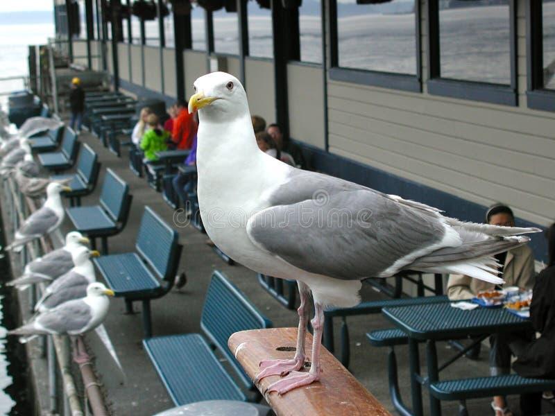 Seagull på Guarde fotografering för bildbyråer