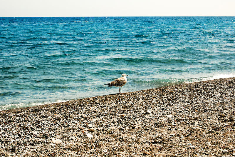 Seagull på kust royaltyfria bilder