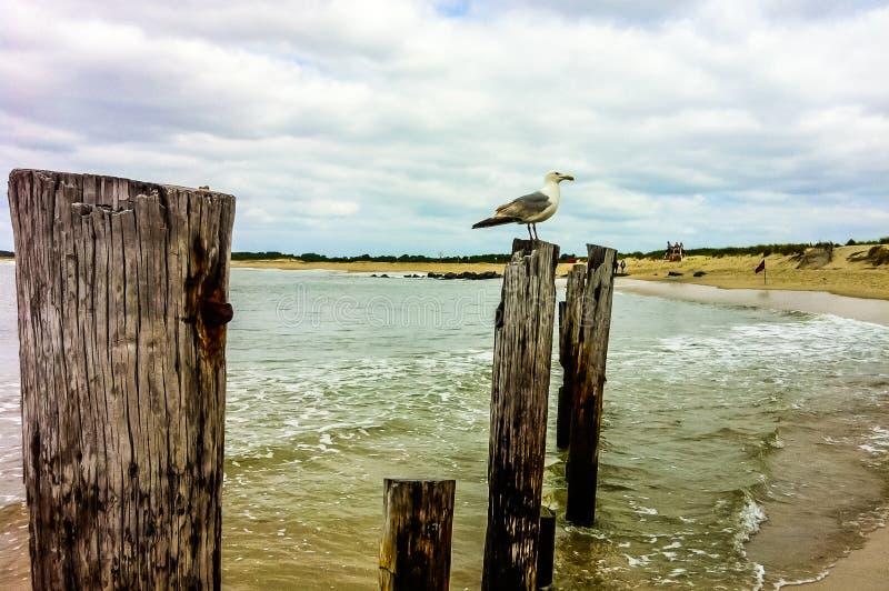 Seagull på stolpen på nytt - ärmlös tröjakust royaltyfri bild