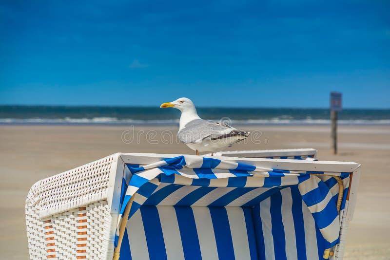 Seagull på strandstol arkivbilder
