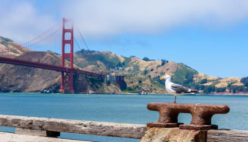 Seagull p? pir och Golden gate bridge i San Francisco, Kalifornien, USA fotografering för bildbyråer