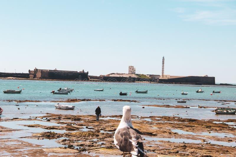 Seagull patrzeje mężczyzna w Cadiz w Andalusia, Hiszpania zdjęcie stock