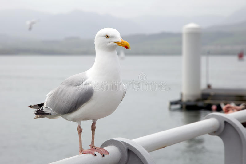 Download Seagull perched on a pier stock photo. Image of ocean - 54753012