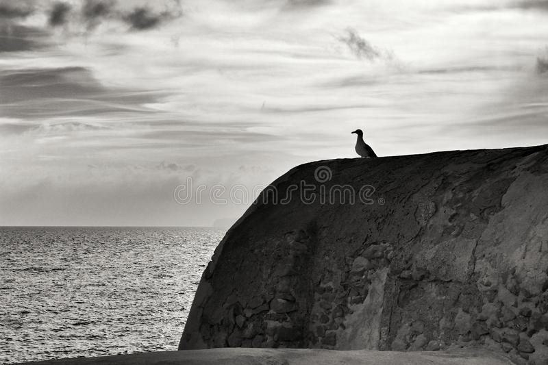 Seagull perched on stone wall on the seashore royalty free stock photos