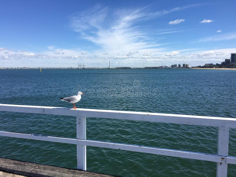 A Seagull on the Pier stock image