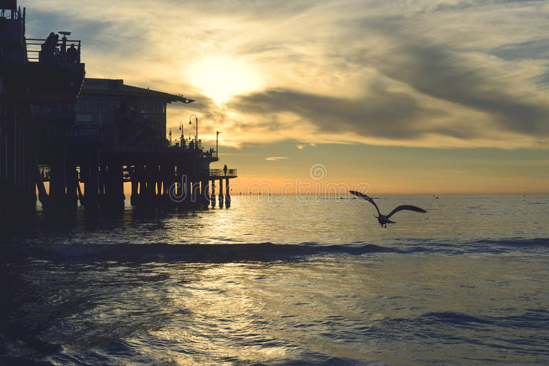 Seagull By Pier At Sunset Free Public Domain Cc0 Image