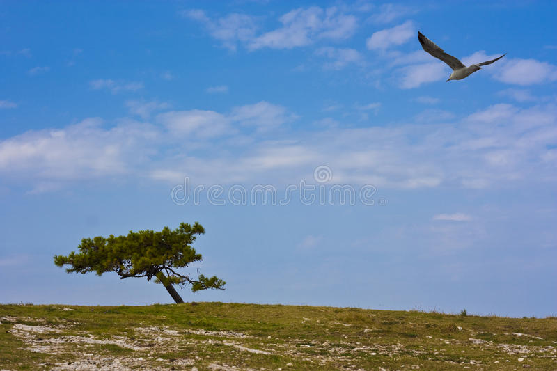 Seagull And Pine Tree Royalty Free Stock Photos