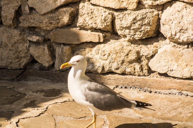 Seagull portreta wakacje letni ptasi zwierzę fotografia royalty free