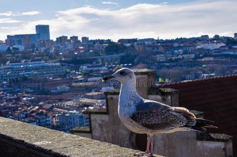 The pose of the gull royalty free stock photo