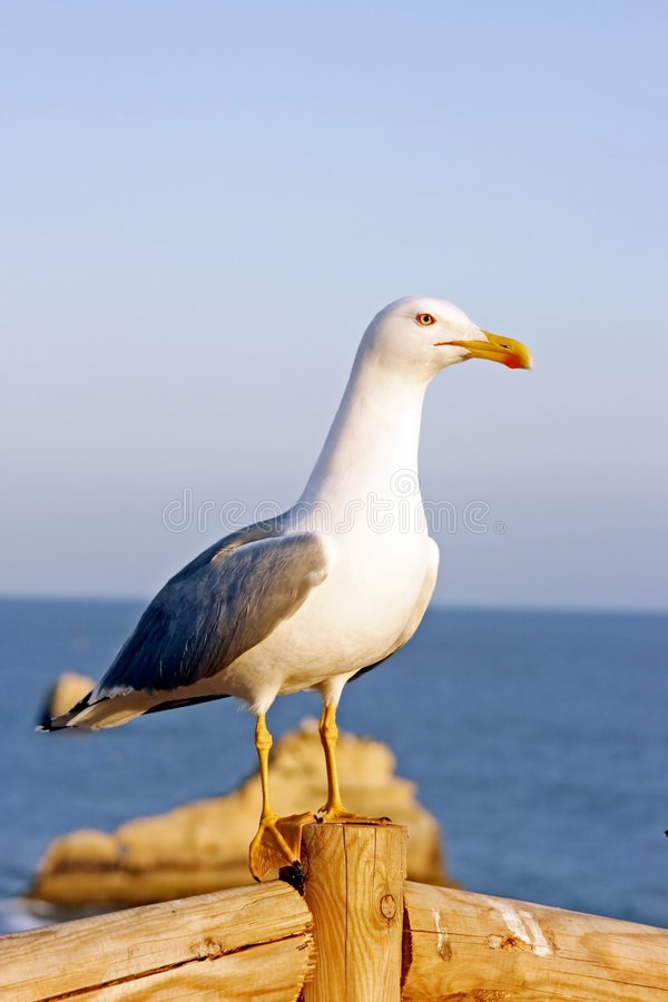 Download Seagull on a post stock photo. Image of seagull, ocean - 2322032