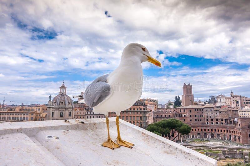 Seagull pozycja na ?cianach Vittoriano budynek przeciw antycznemu Roma?skiemu forum zdjęcia royalty free