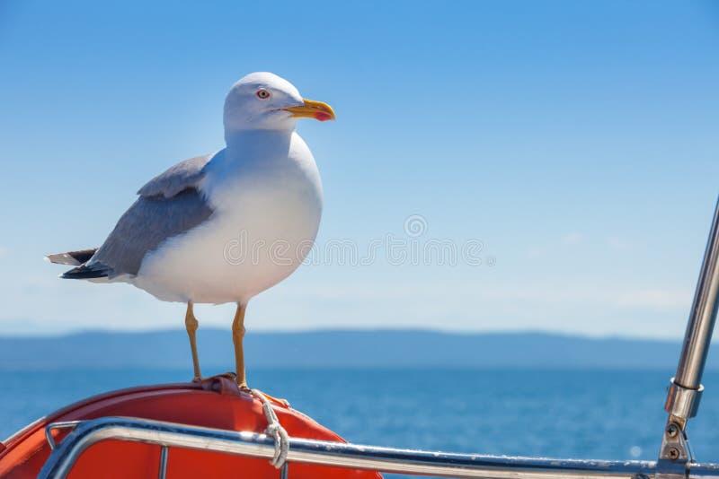 Seagull pozycja na pomarańczowym lifebelt obraz stock