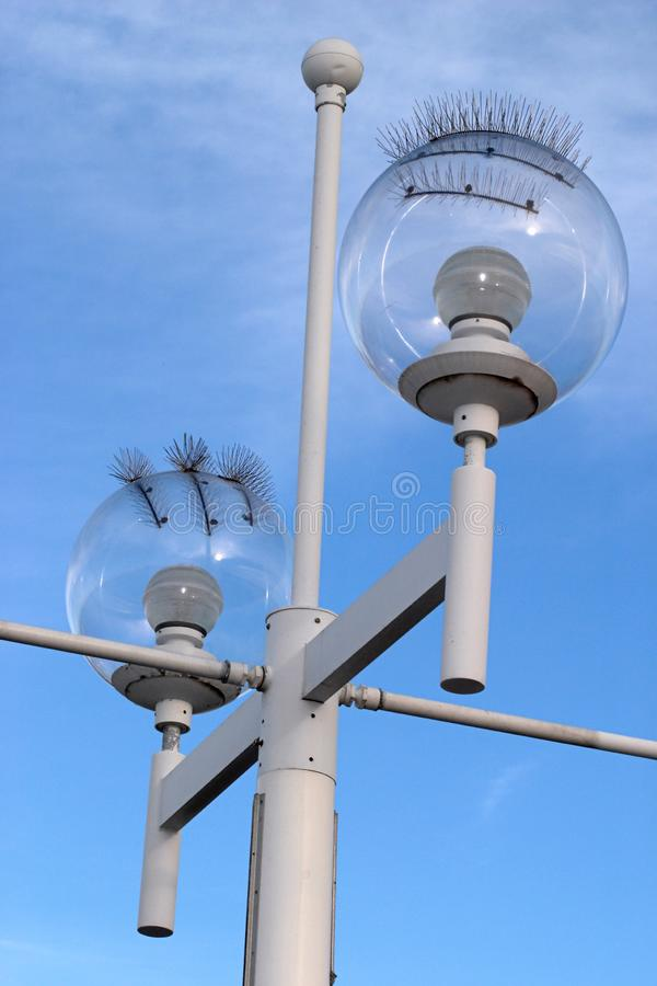 Seagull-proof Street Lamp Free Stock Photo