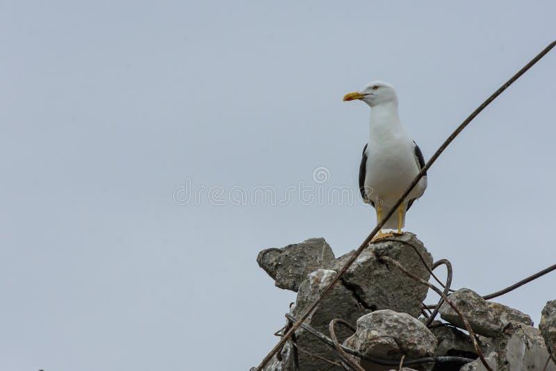 Seagull przegapia scenę od wyburzającego budynku obrazy royalty free