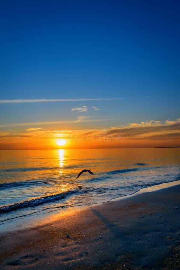Seagull przy zmierzchem zdjęcie stock