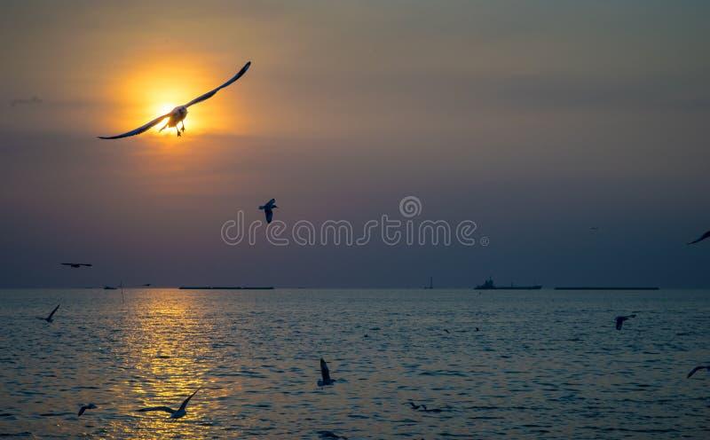 Seagull ptaki lata w niebie z zmierzchem nad morzem obraz royalty free