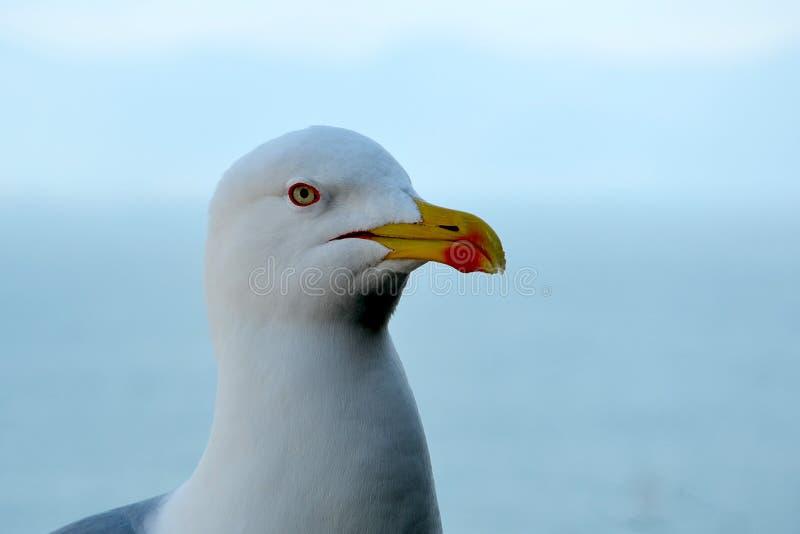 Seagull ptasi obsiadanie z morze głowy szczegółem zdjęcia stock